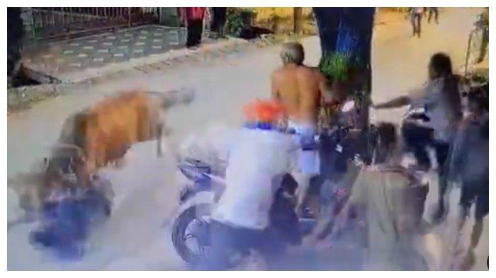 Kronologi Lembu untuk Kurban Idul Adha Lepas, Seruduk 3 Warga Kecamatan Medan Sunggal