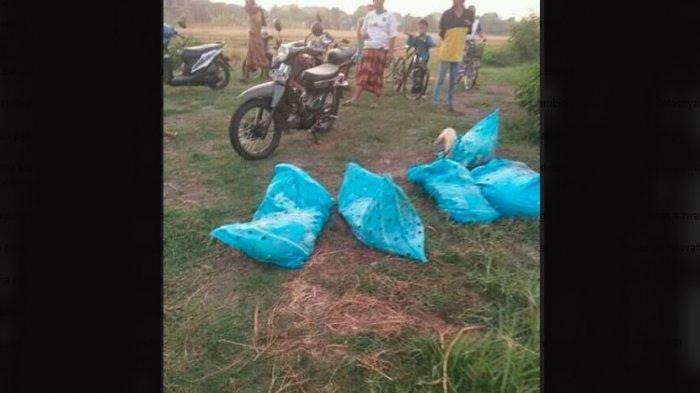 Pencuri Tinggalkan 5 Ekor Kambing di Area Persawahan Desa Sukodono