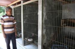 Kopi  Luwak di Wonosalam, Harga Kaki Lima Rasa  Bintang Lima