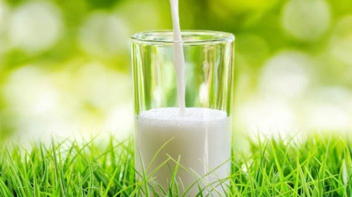 Manfaat Kesehatan Susu Kambing, Dapat Meningkatkan Kesehatan Tulang dan Jantung