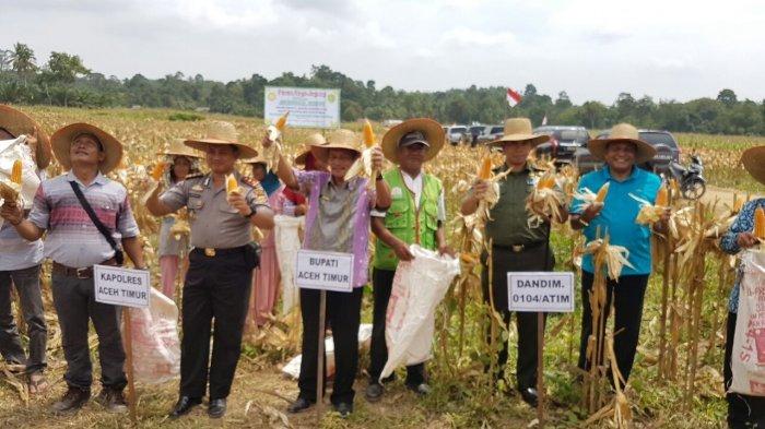 Mantan Gubernur Aceh Abdullah Puteh Panen Perdana Jagung, Hasilnya Dihibahkan kepada Masyarakat