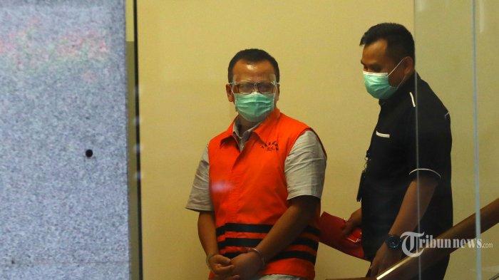 KPK Selisik Izin Ekspor Benih Lobster yang Diberikan Edhy Prabowo