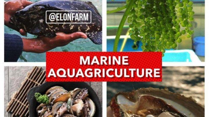 Inovasi Pertanian Berbasis Air Laut, Marine Aquagriculture Bisa Produksi Pangan Secara Masif