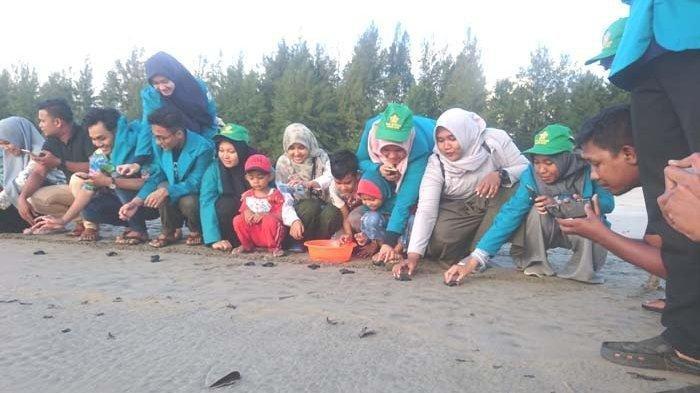Mahasiswa dan masyarakat di Pantai Gampong Keude Panga, Aceh Jaya, melepaskan tukik (bayi penyu) ke laut.