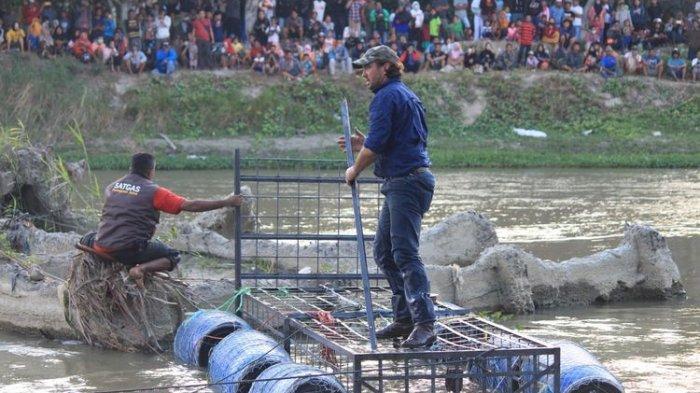 Matt Wright saat memasang perangkap untuk buaya berkalung ban di Sungai Palu, Sulawesi Barat