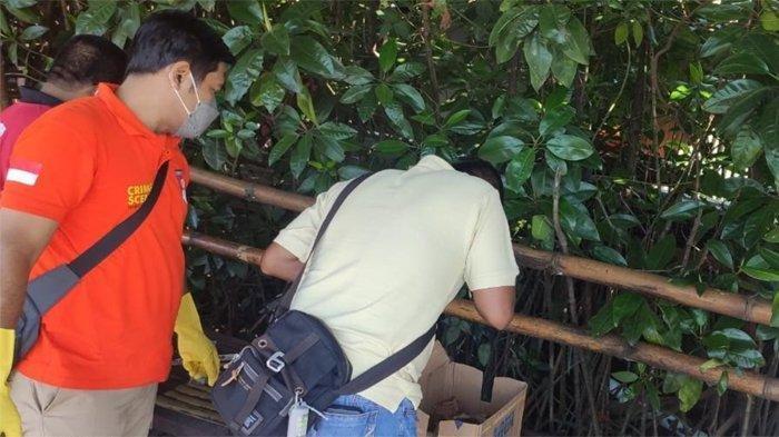 Penemuan Mayat Bayi Perempuan di Ekowisata Mangrove Surabaya, Kondisinya Sudah Tak Utuh