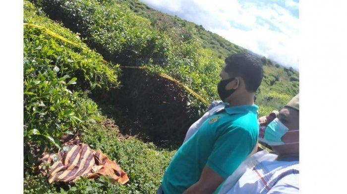 Mayat di kebun teh Kayu Aro, Kabupaten Kerinci, Minggu (24/5/2020).