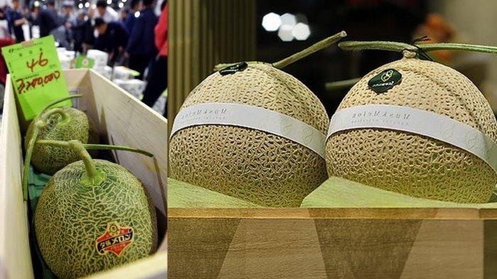 7 Alasan yang Buat Melon di Jepang Harganya Sangat Mahal hingga Ratusan Juta