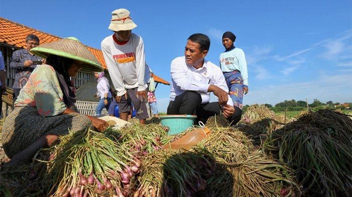 Mentan: Petani Bawang Merah Brebes Menikmati Keuntungan, Harga di Tingkat Petani Rp 20.000 Per Kg