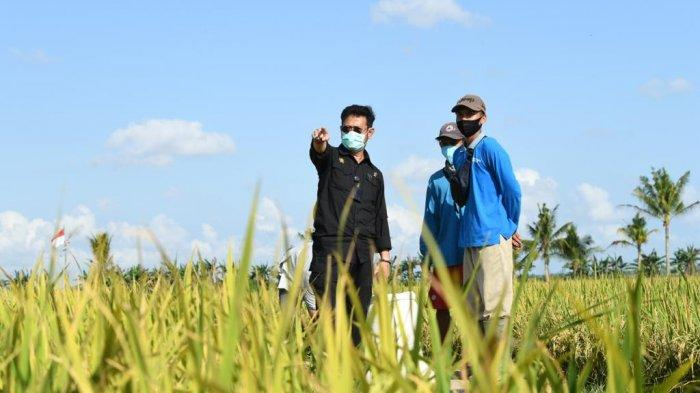 Terbukti Tingkatkan Kesejahteraan Petani, Mentan SYL Ingin Serapan KUR Diperluas