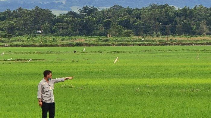 Solusi Hadapi Pandemi Covid-19 ala Menteri Pertanian Syahrul Yasin Limpo