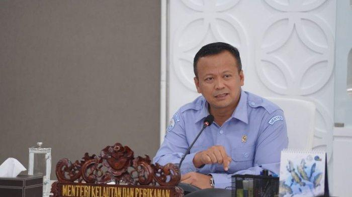 Kontroversi Menteri Edhy Ubah Aturan Larangan Ekspor Benur hingga Berujung OTT KPK
