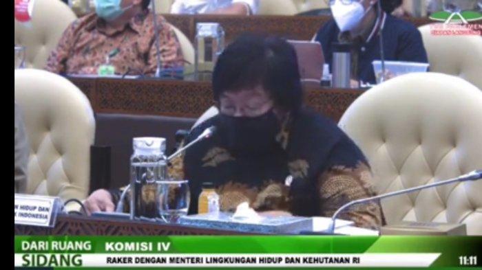 Menteri LHK Ungkap 637 Hektar Lahan Gambut dan Mangrove di 9 Provinsi Kritis