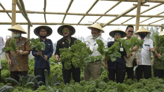 Mentan Syahrul Apresiasi Petani Milenial Budidayakan Sayuran Organik