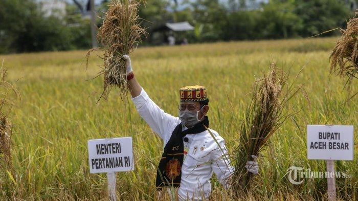 Kementan Terus Kawal Masa Panen Padi di Semua Wilayah Indonesia