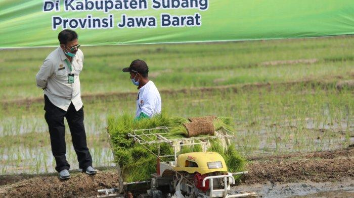 Kementan Bantu Asuransi Pertanian 100.000 Ha Sawah di Subang