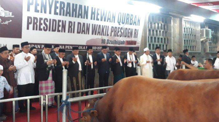 Jokowi-JK Serahkan Hewan Kurban Berbobot Lebih dari 1 Ton di Masjid Istiqlal