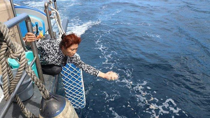 Menteri Kelautan dan Perikanan RI Susi Pudjiastuti melepasliarkan 173.800 ekor bibit lobster di perairan Nusa Penida Bali, Sabtu (13/7/2019) dari kapal.