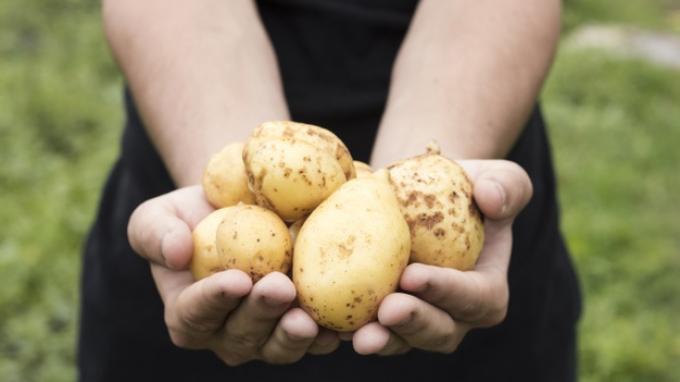 10 Makanan Sehat yang Bisa Berbahaya dan Mematikan Jika Diolah dengan Cara yang Salah, Apa Saja?