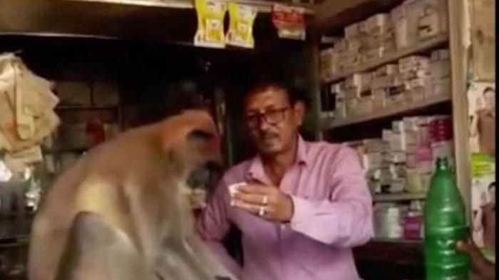 Usai Berkelahi, Monyet yang Berlumuran Darah Ini Datangi Apotek
