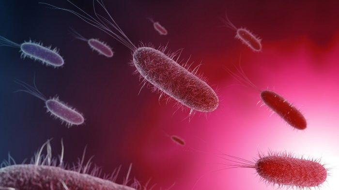 Ada Komunikasi Antara Mikroba Usus dan Otak Anak