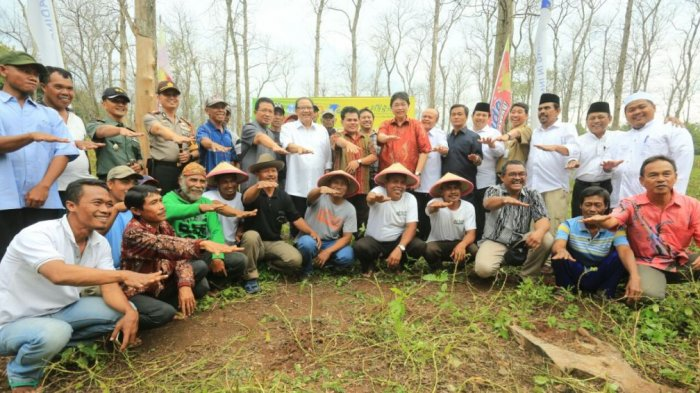 MUI Bersama GarudaFood dan Perhutani Panen Kacang di Bojonegoro