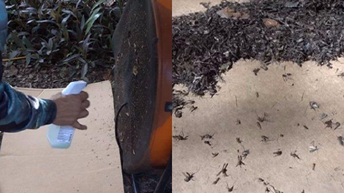 Pria Ini Bunuh 8 Ribu Nyamuk dengan Peralatan Sederhana, Kamu Bisa Mencobanya!