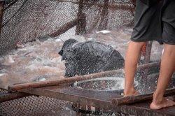 Kampanye World Day for the End of Fishing Tingkatkan Kesadaran Dampak Industri Budidaya Ikan