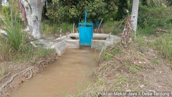 Optimasi Lahan Rawa Tingkarkan Indeks Pertanaman Petani Indragiri Hulu Riau