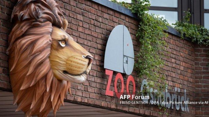 Penjaga Kebun Binatang di Jerman Diserang Singa saat Bersihkan Kandang