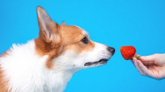 Tak Bikin Keracunan atau Sakit Perut, Buah Ini Bisa Dimakan oleh Anjing
