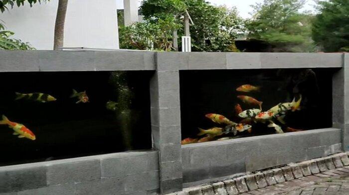 VIRAL Pagar Rumah dari Kolam Ikan Koi, Pemilik Sebut Ada 70-80 Ekor, Beberkan Biaya yang Dikeluarkan