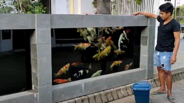 Punya Pagar Rumah dari Kolam Koi, Pria Ini Tak Takut 80 Ekor Ikan Miliknya Dicuri, Kisahnya Viral