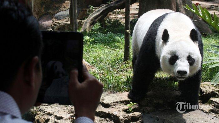Anak-anak Dilarang ke Kebun Binatang saat New Normal, Sosiolog: Tugas Orang Tua