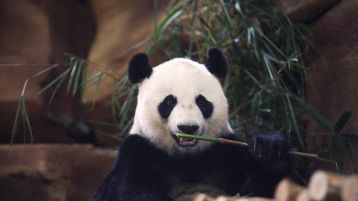 Vietnam- Panda Tour