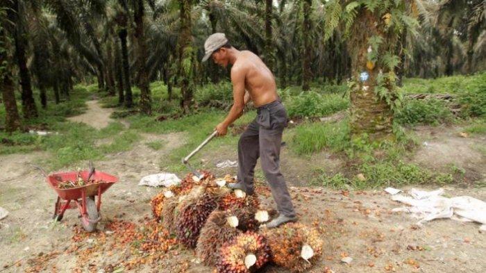 Perusahaan Besar yang Punya Kebun Kelapa Sawit Luas Ternyata Tak Berkantor di Indonesia