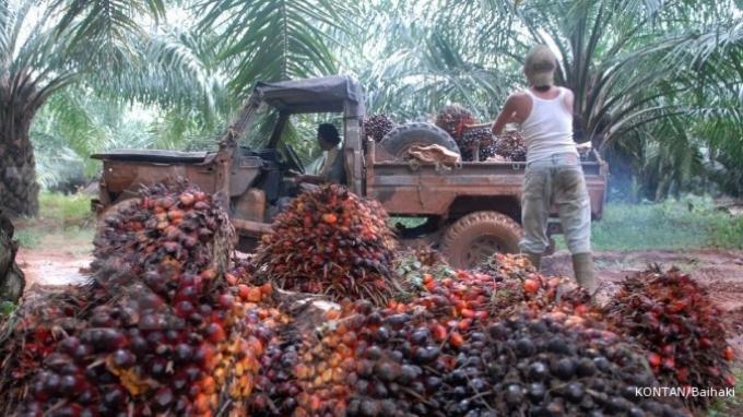 APPKSI Minta Pemerintah Cabut Pemberlakuan Pungutan Ekspor CPO