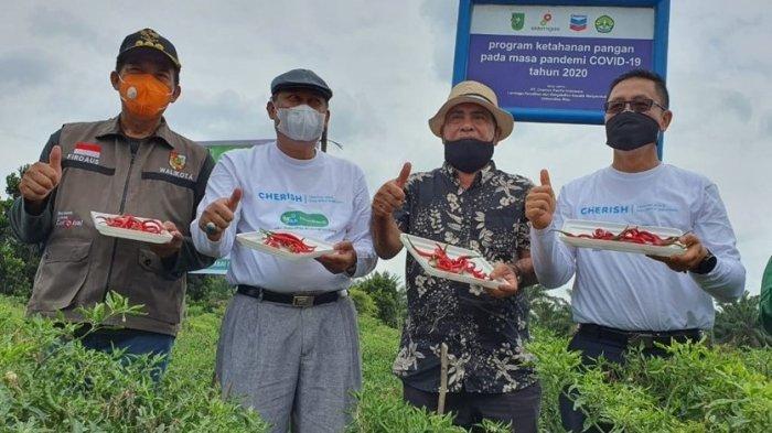 Platform Digital Ini Disiapkan untuk Bantu Pasarkan Komoditi Petani Riau