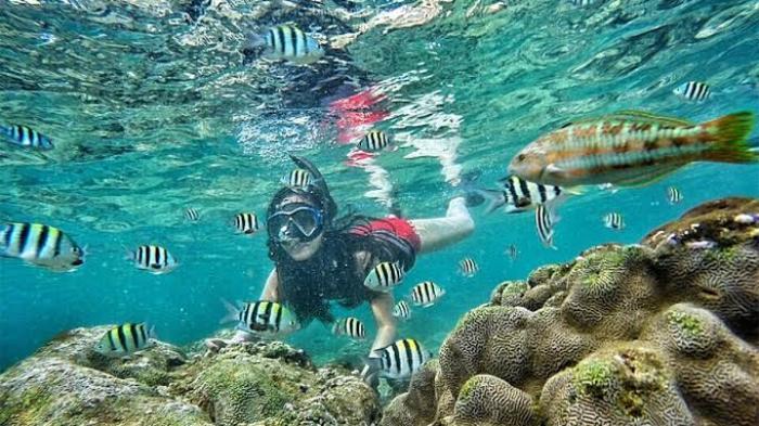Waspada Terhadap 5 Hewan Laut Ini Saat Menyelam
