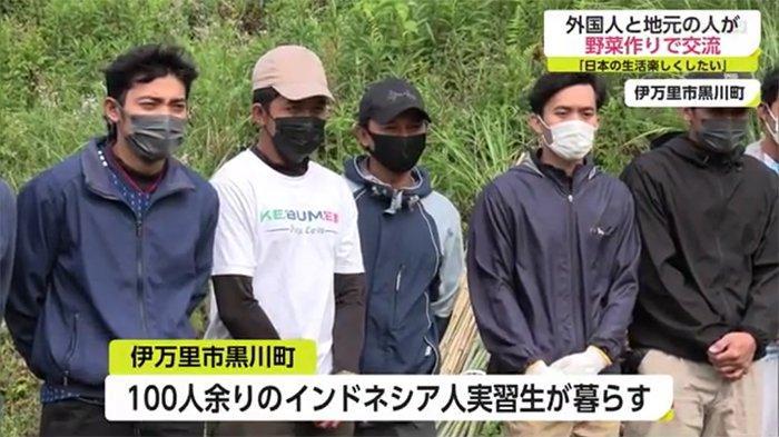 30 Pemagang Indonesia Berpartisipasi Menanam Bibit Sayuran di Saga Jepang