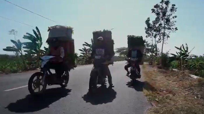 VIRAL - Video MotoGP Tembakau Bikinan Fans Berat Valentino Rossi asal Madura, Gak Nyangka Jadi Viral