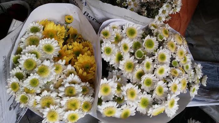 Pasar Bunga Rawa Belong Semerbak Wangi Bunga Bunga Impor Maupun Lokal Komplit Tribunnews Com Mobile