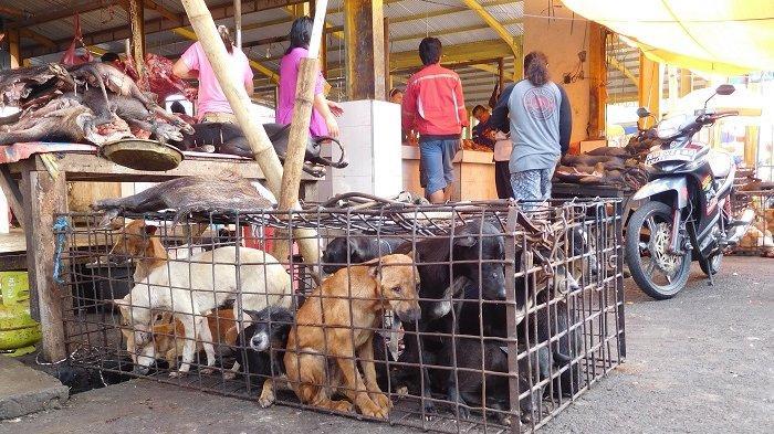 Kegiatan di pasar hewan liar Tomohon, Sulawesi Utara masih berjalan normal meski desakan penutupan pasar terus mengintai.