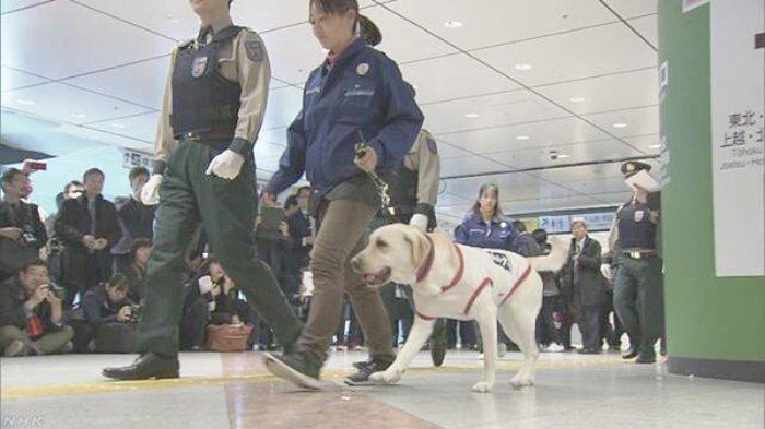 Pasukan Anjing Pelacak Jepang Periksa Penumpang Kereta Termasuk Shinkansen Bagi Pengamanan Olimpiade