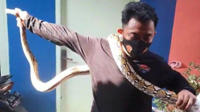 Ular Sanca Ditemukan di Kawasan Taman Makam Wakaf Cipete, Warga Khawatir Dipatok saat Ziarah