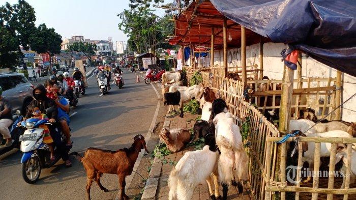 Sejumlah pedagang hewan kurban menjajakan daganganya diatas trotoar Jalan KS Tubun Slipi, Jakarta Barat, Selasa(28/7/2020). Hewan-hewan kurban didatangkan langsung dari berbagai kota di Jawa Timur, Jawa Tengah dan Jawa Barat untuk memenuhi kebutuhan warga DKI Jakarta dalam merayakan Idul Adha. (WARTAKOTA/Henry Lopulalan)