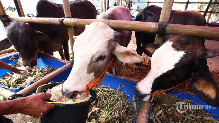 Polri Bakal Awasi Protokol Kesehatan Salat Idul Adha dan Penyembelihan Hewan Kurban