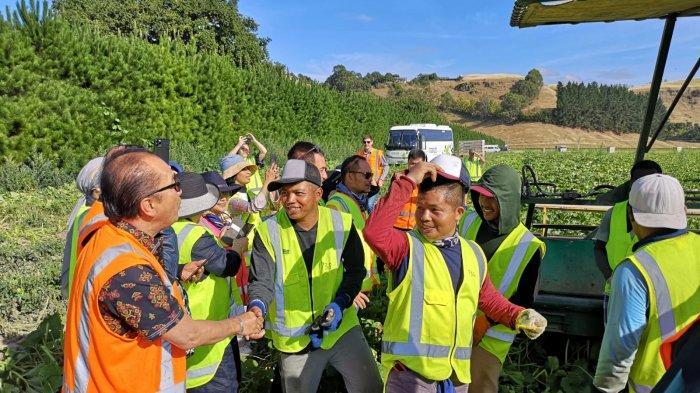 Pekerja pemetik buah musiman asal Indonesia. Ada 165 orang pekerja Indonesia pemetik buah musiman yang bekerja  di perkebunan John Bostock di Hawke's Bay, Selandia Baru