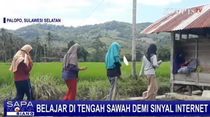 Siswa di Padang Lambe Palopo Belajar di Tengah Sawah Demi Sinyal Internet