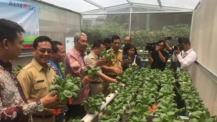 Berdayakan Penghuni, Pemprov DKI Hadirkan Kebun Hidroponik di Lingkungan Rusun